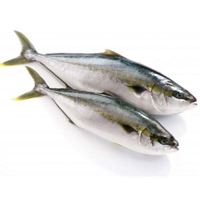 Cá Cam Trung Quốc